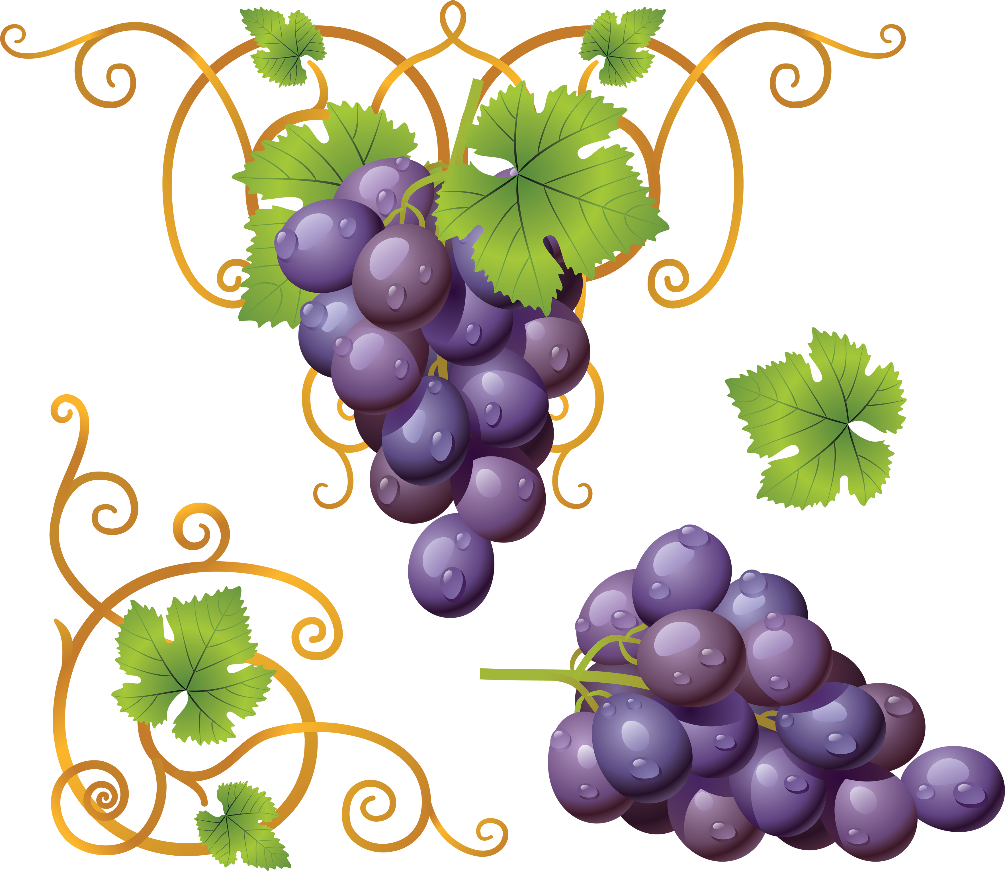 collection of png. Grapes clipart purple colour