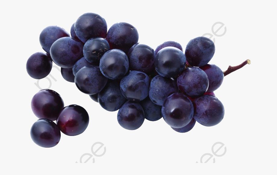 Grapes fruit free . Grape clipart purple colour
