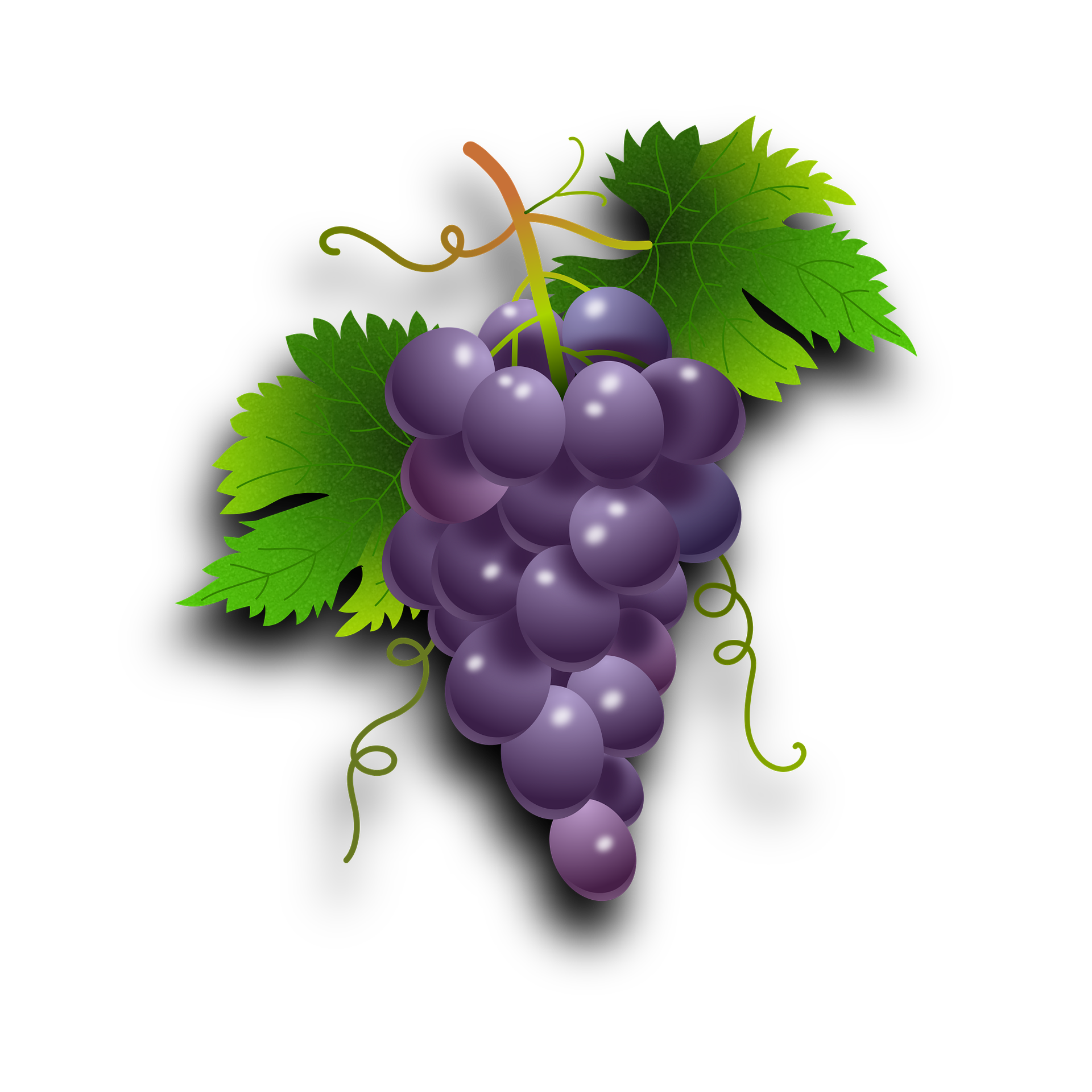 Grapes clipart grape soda. Purple x everyday foods
