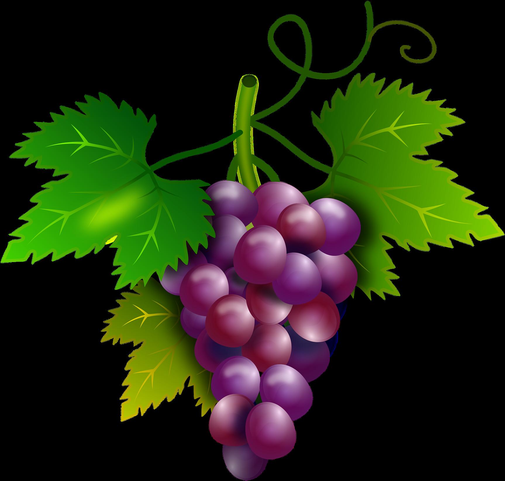 Grapes clipart purple food. Cacho de uva png