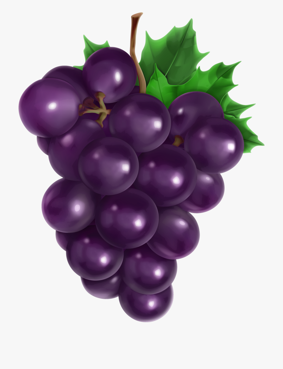 Transparent png picture gallery. Grapes clipart real purple