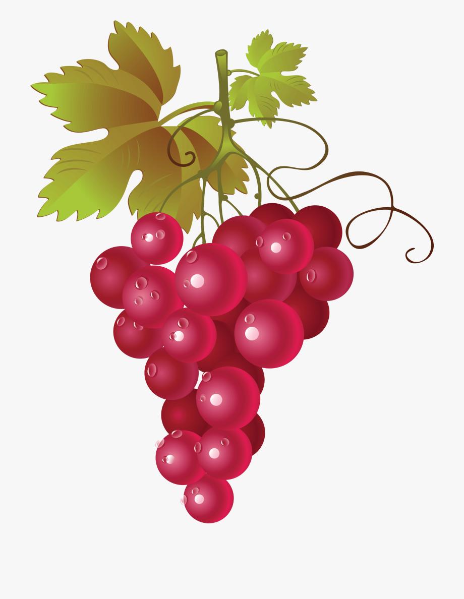 Grapes free . Grapevine clipart red grape