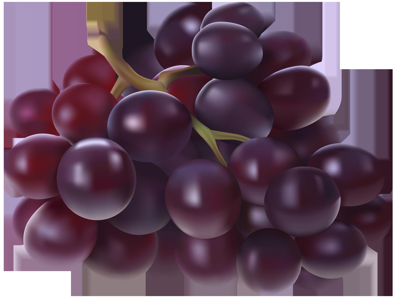 Grapes transparent png image. Watermelon clipart grape