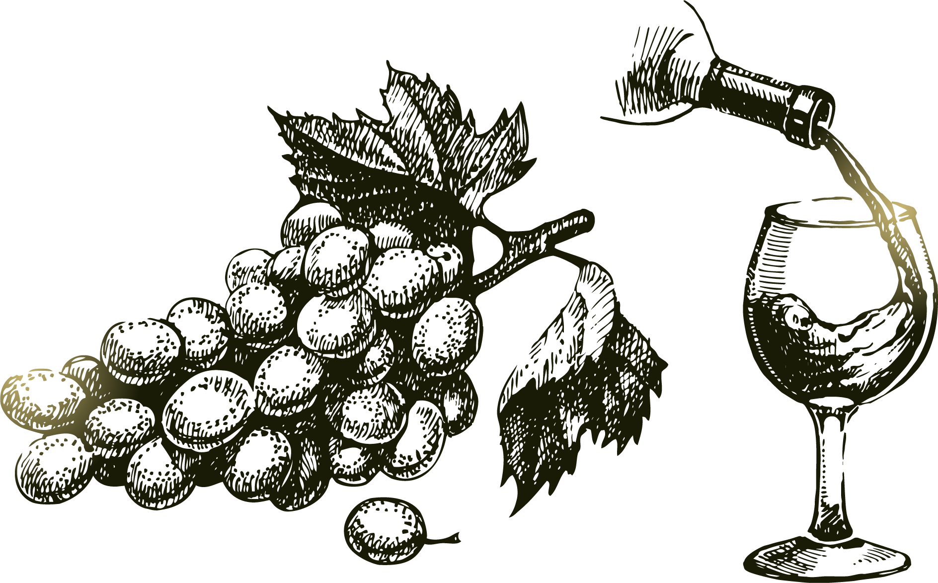 Grape vine drawing at. Grapes clipart branch