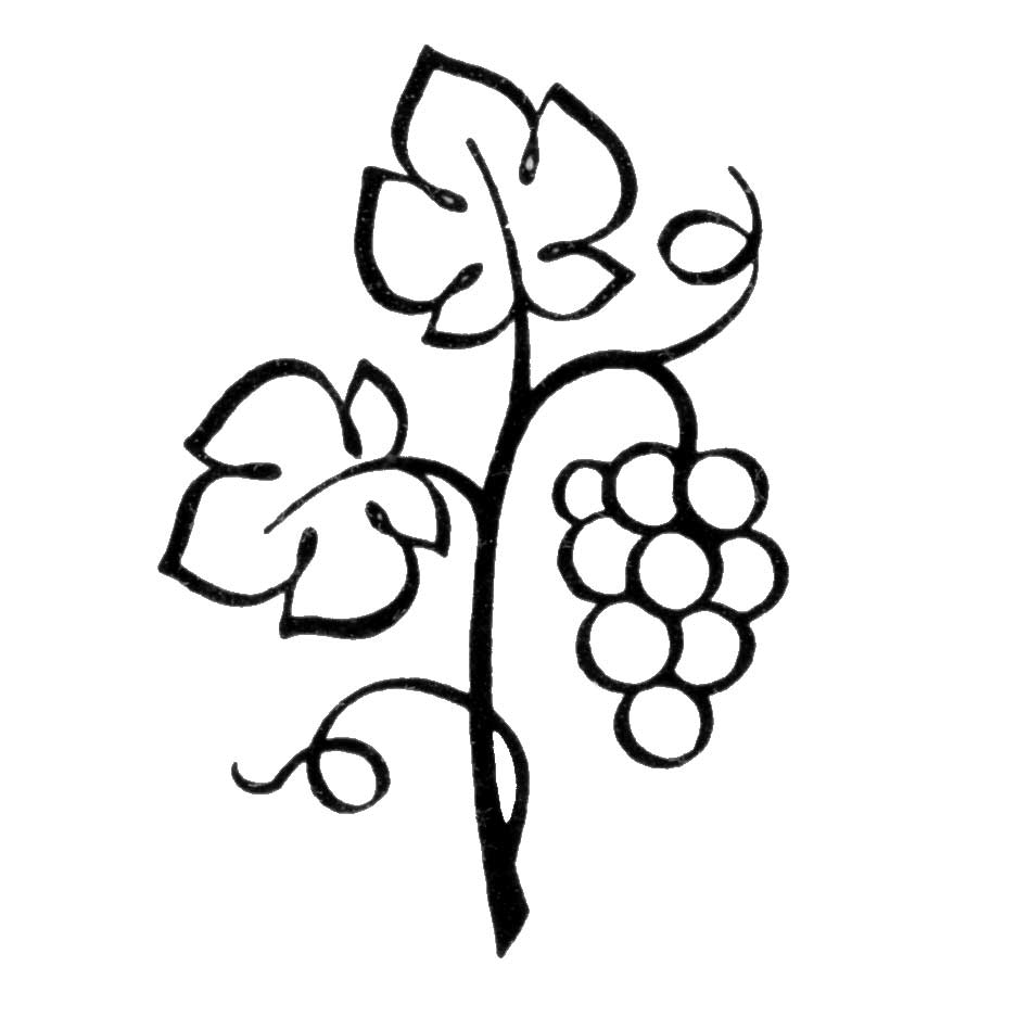 Grapes clipart branch. Best clipartion com