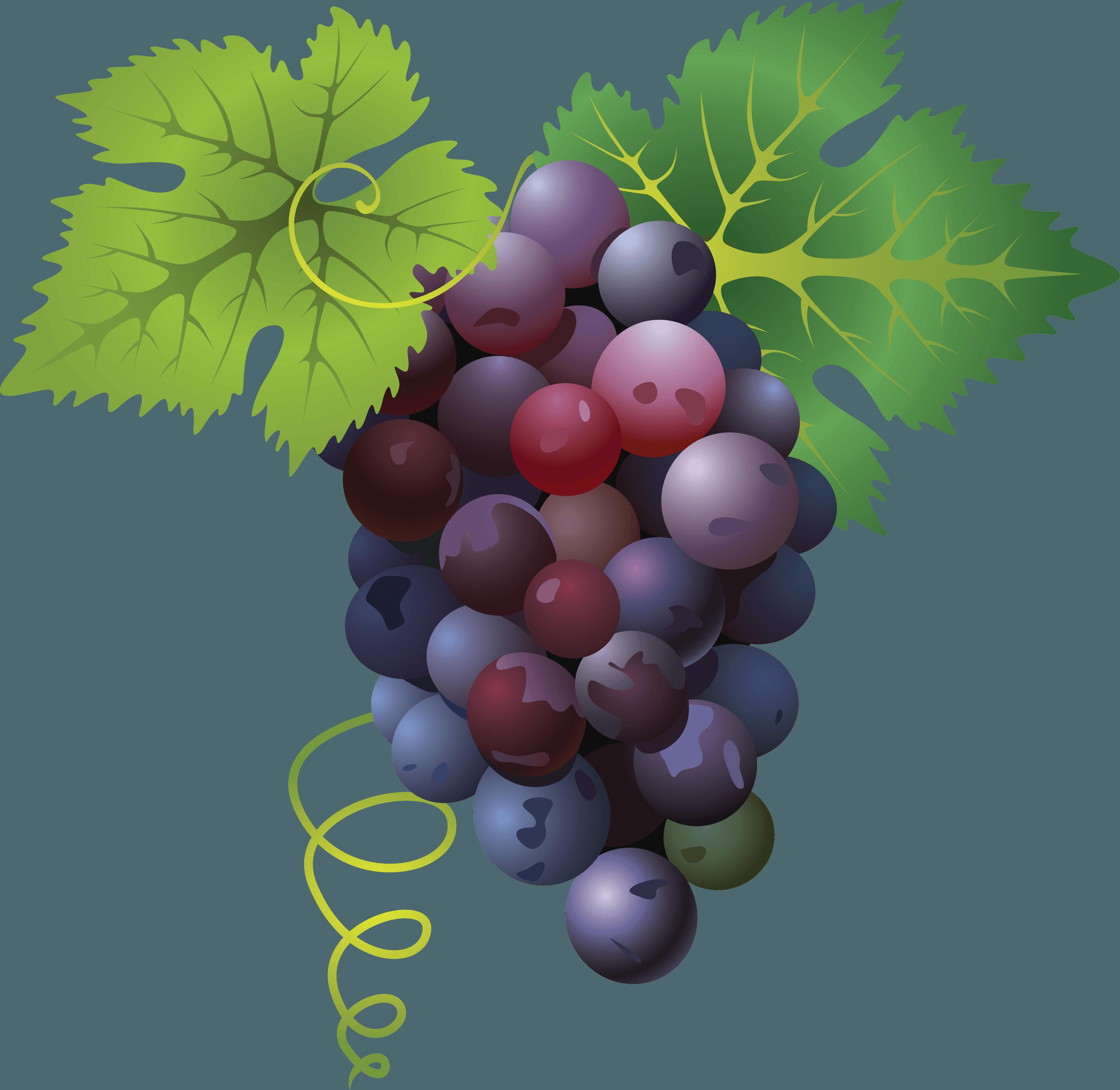 Grapes clipart face. Grape png transparent free