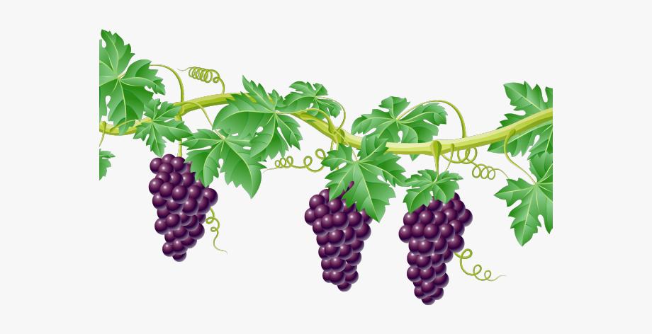 Grapes border vines free. Grape clipart vine clip art