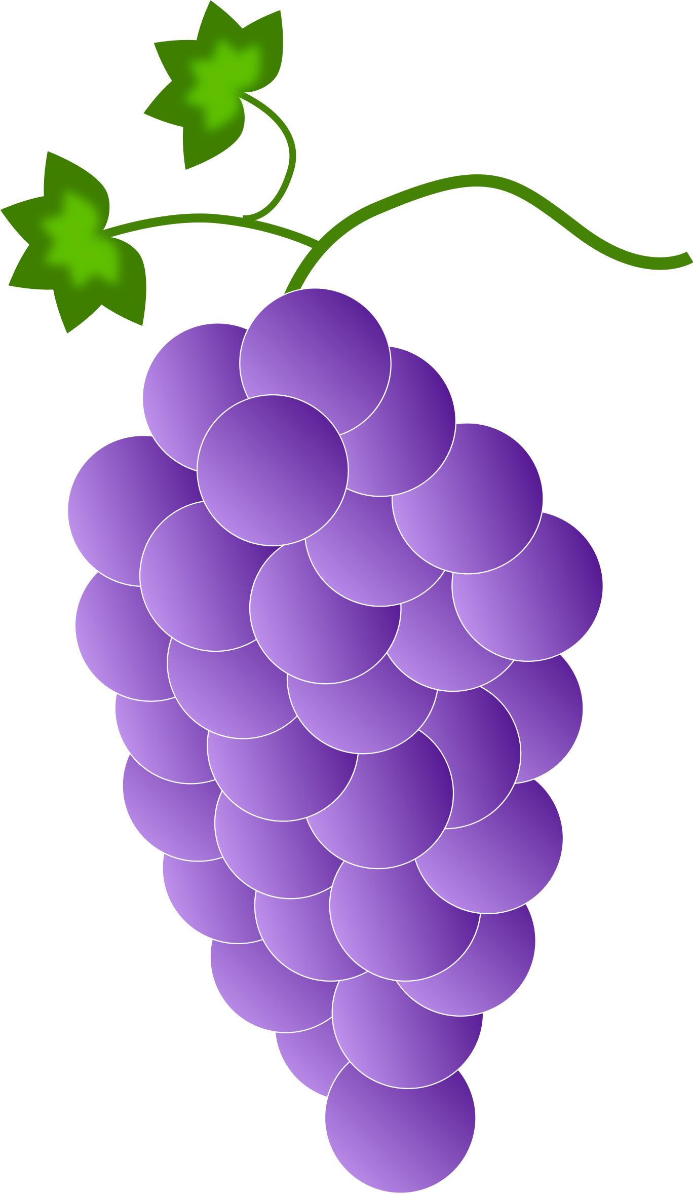 Grape clipart vine clip art. Common color purple grapes