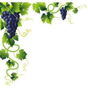 Grape clipart vine clip art. Grapevine free