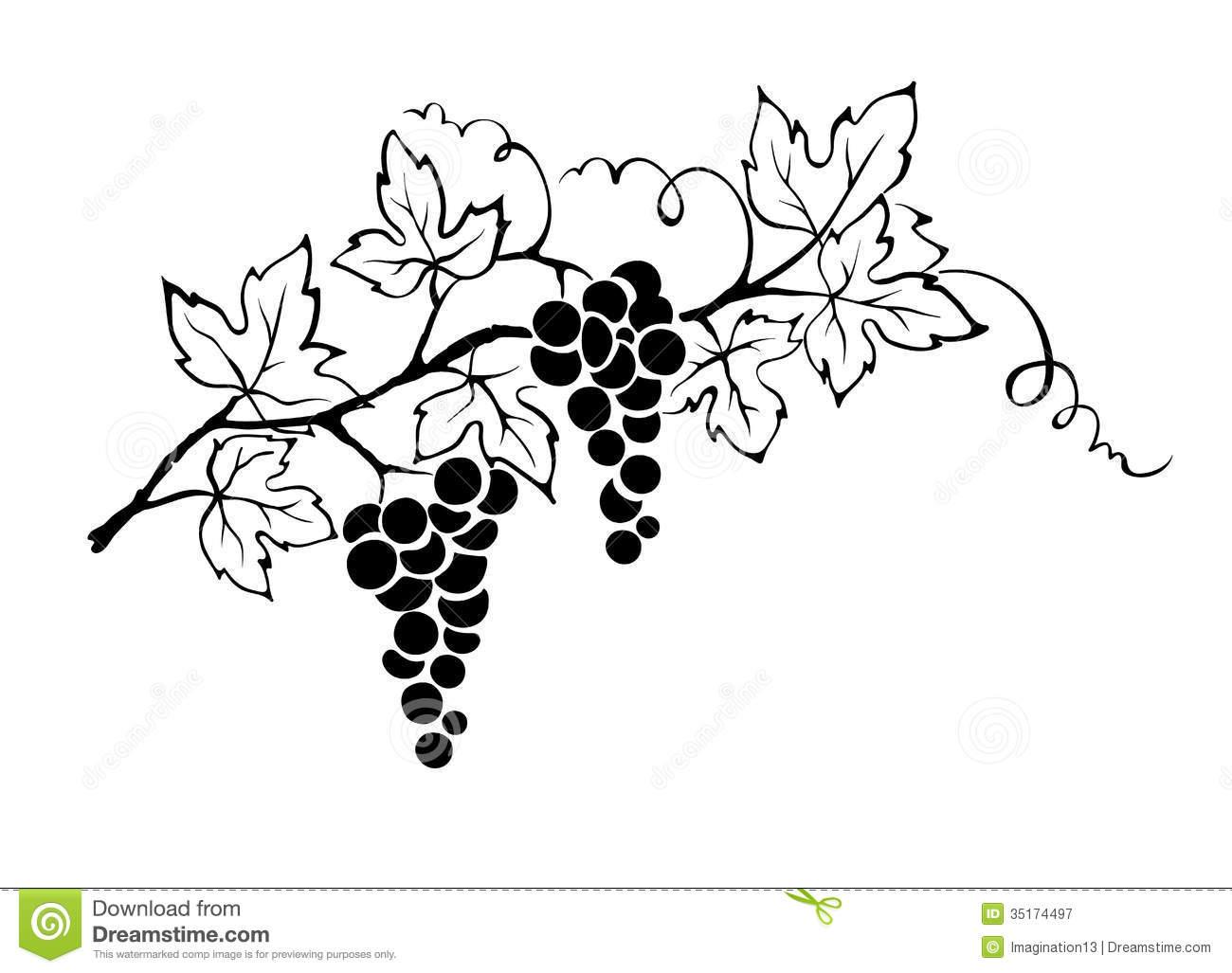 Grape clipart vine clip art.  clipartlook