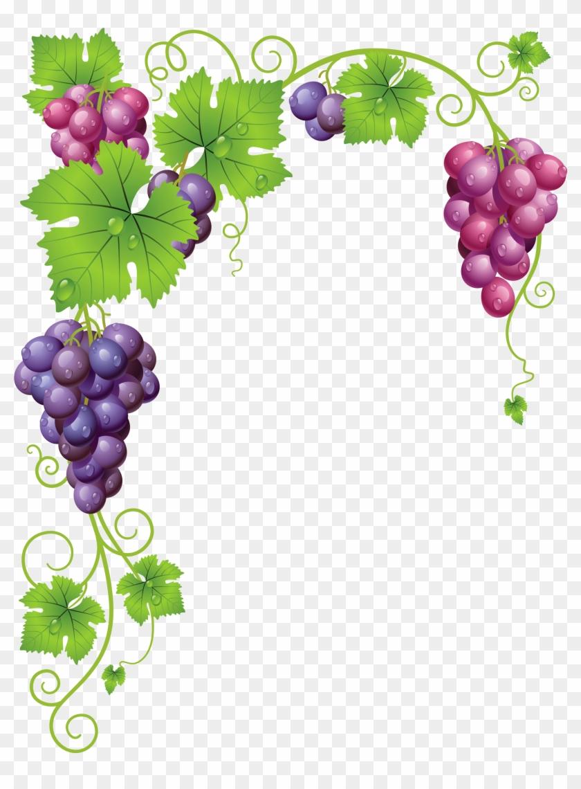 Grapevine clipart grape garden. Vine vineyard grapes frame
