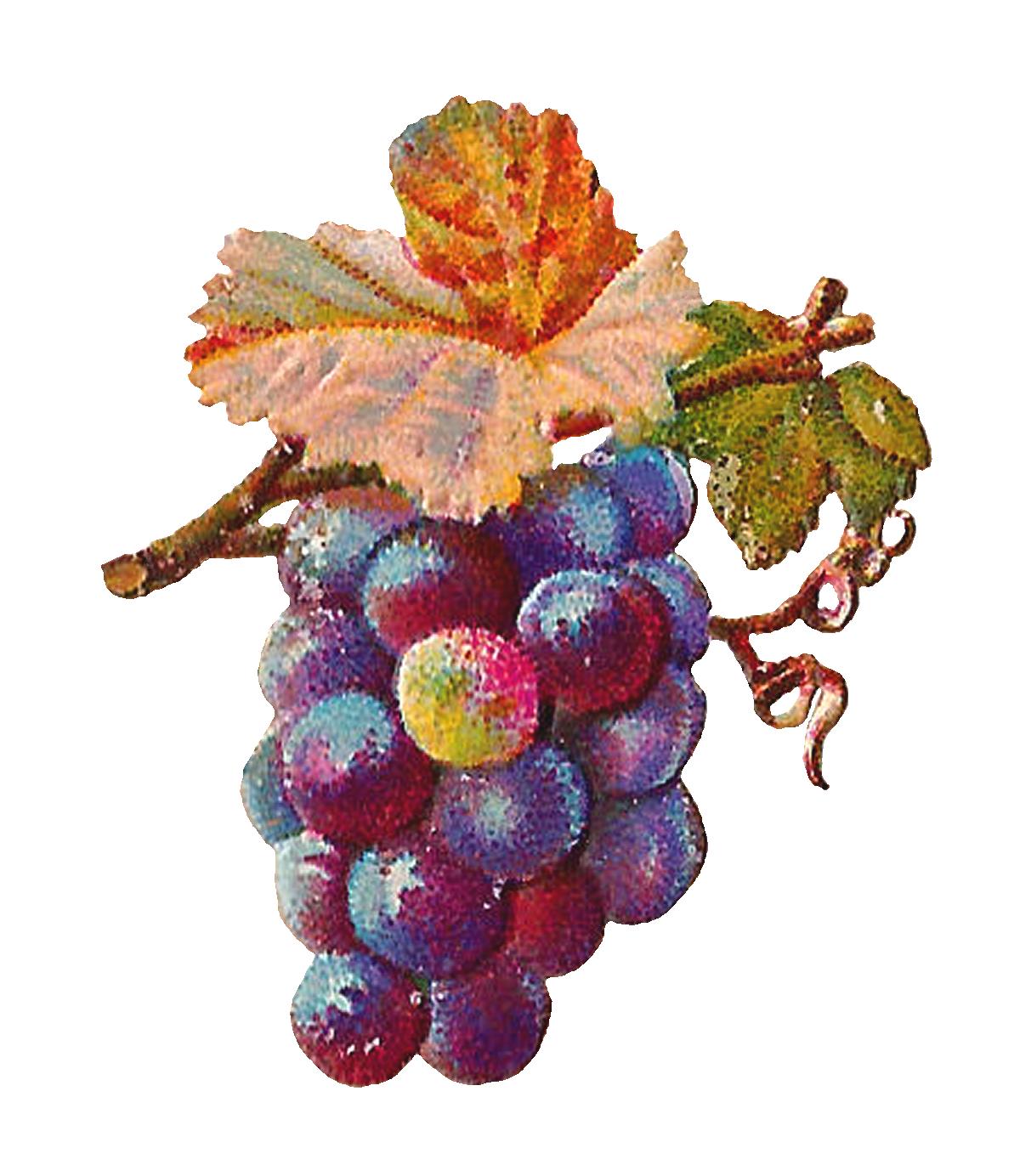 Grape clipart vintage. Purple download animal clip