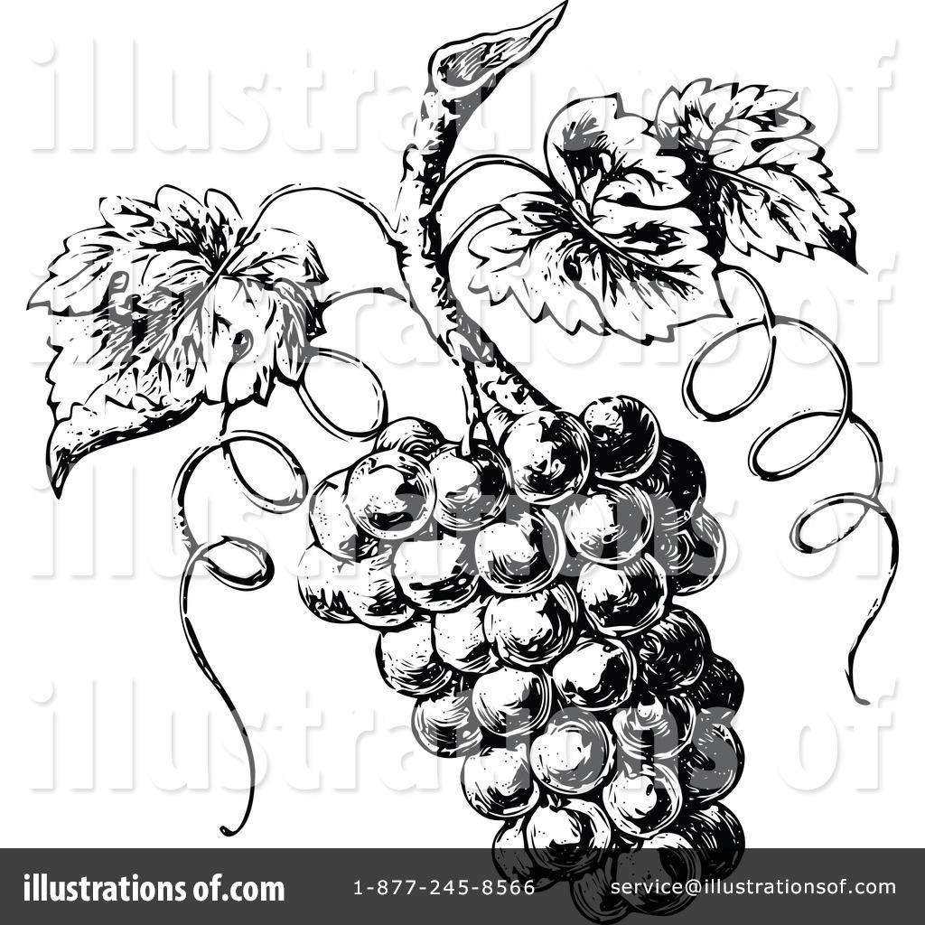 Grape clipart vintage. Grapes illustration by prawny