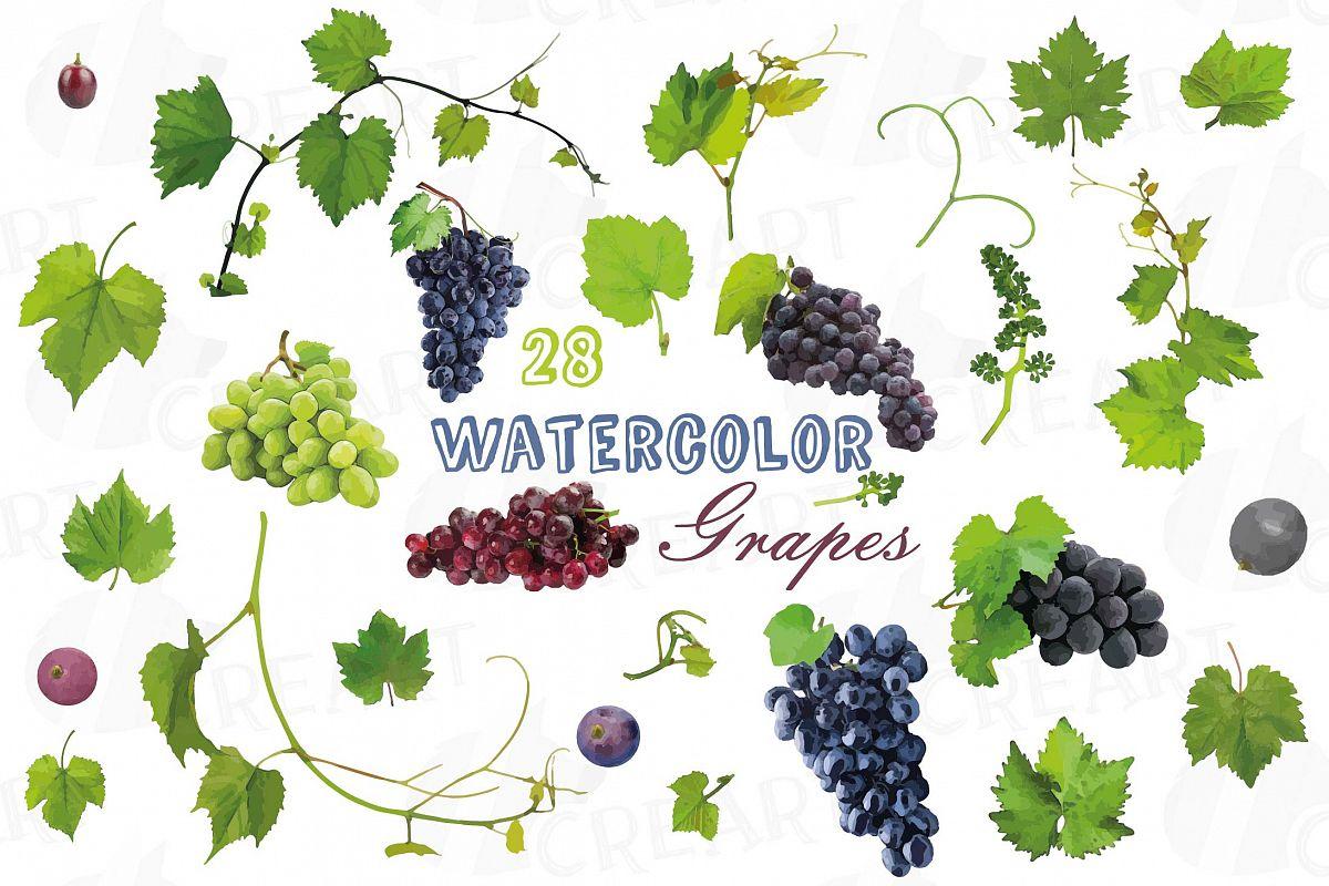 Grapes clipart branch. Clip art watercolor wine
