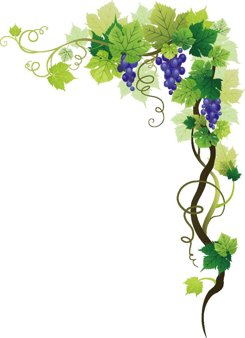 Common grape picture frame. Grapes clipart watermelon vine