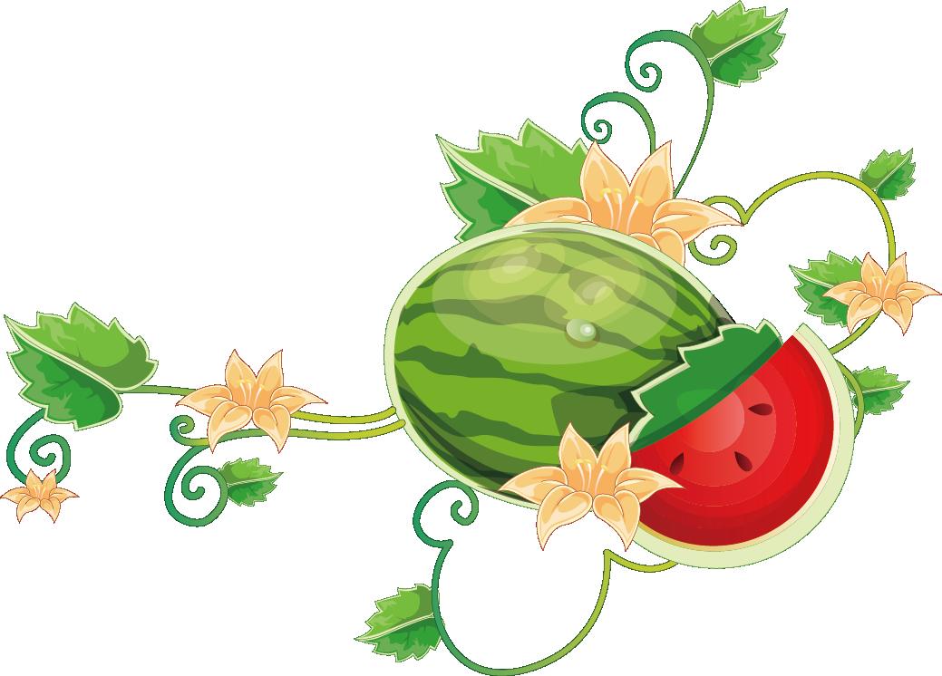 Grapes watermelon vine