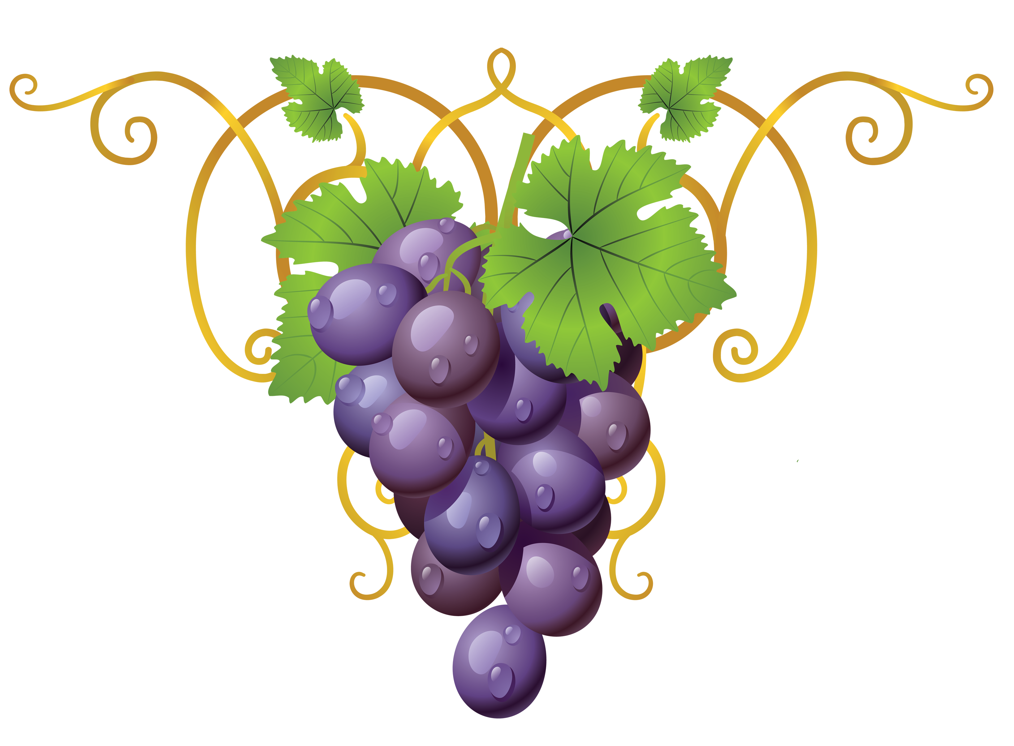 Transparent vine decorative element. Wheat clipart grape