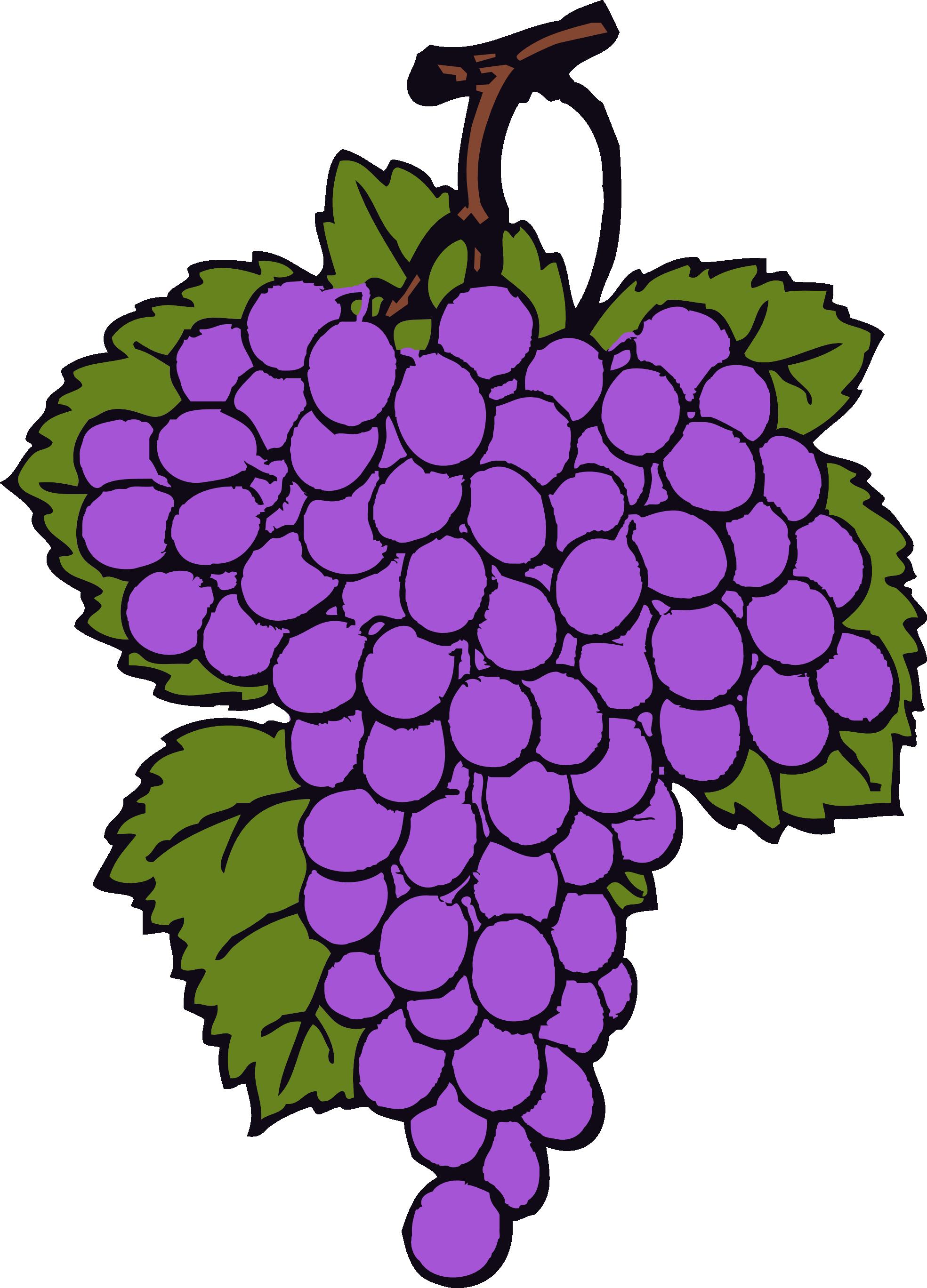 Grape clipart wine grape. Grapes and panda free