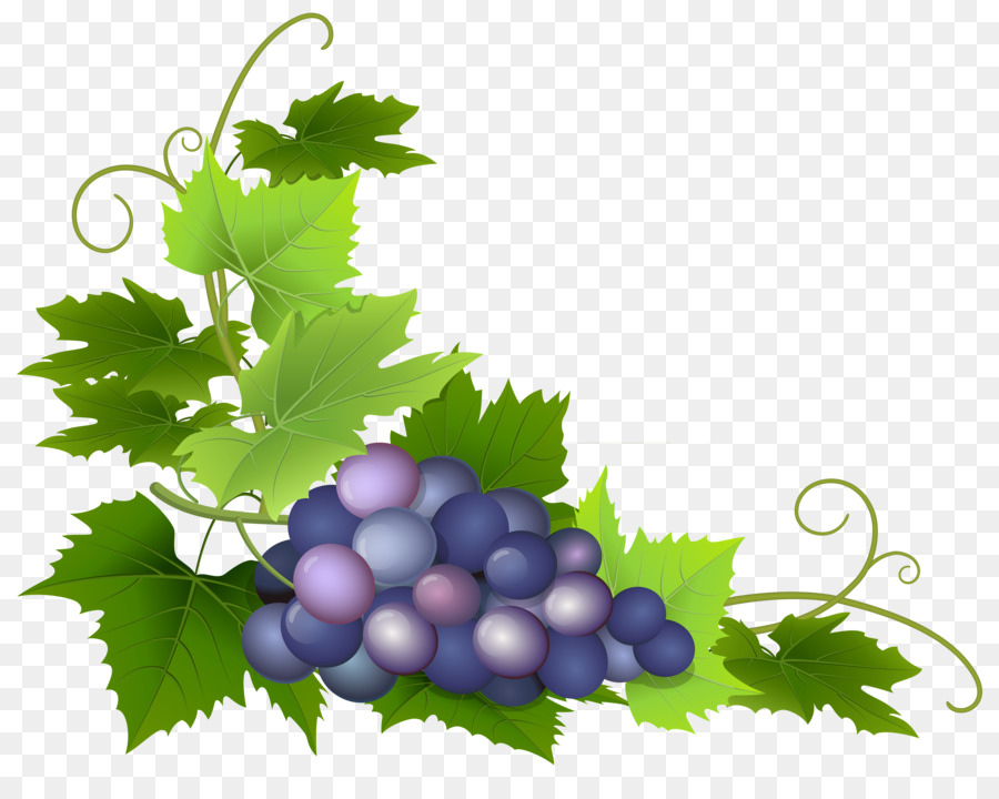 Cartoon food transparent clip. Grapes clipart wine grape