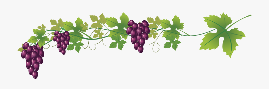 Grape clipart wine grape. Common royalty free clip