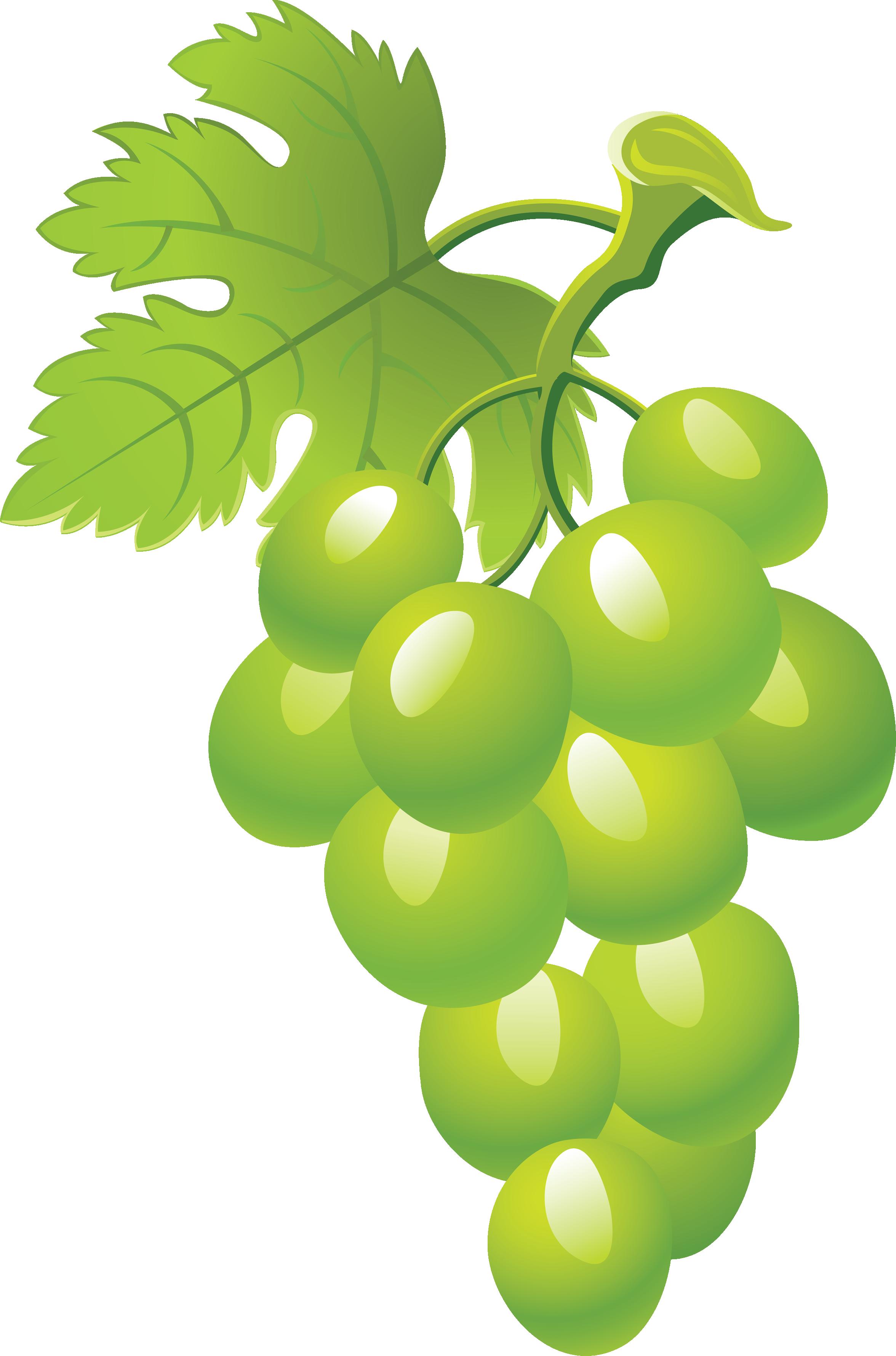 Grapes png image purepng. Grape clipart wine grape