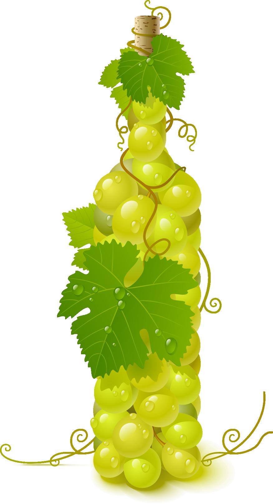 Common vine clip art. Grape clipart wine grape