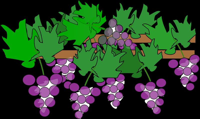 Vineyard clip art grapes. Tree clipart vine