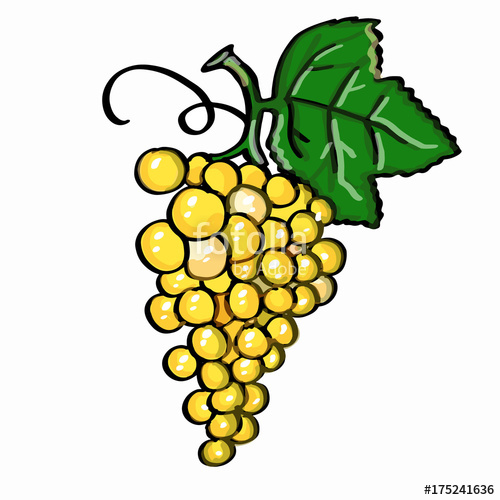Grape and white background. Grapes clipart yellow