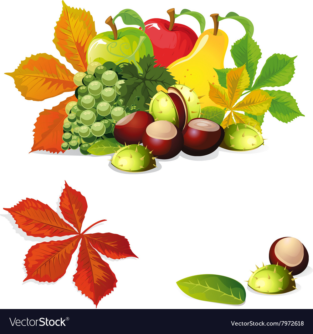 Grapes clipart autumn fruit. Free download clip art