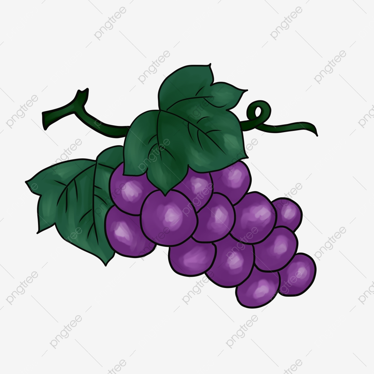 Hand painted harvest season. Grapes clipart autumn fruit