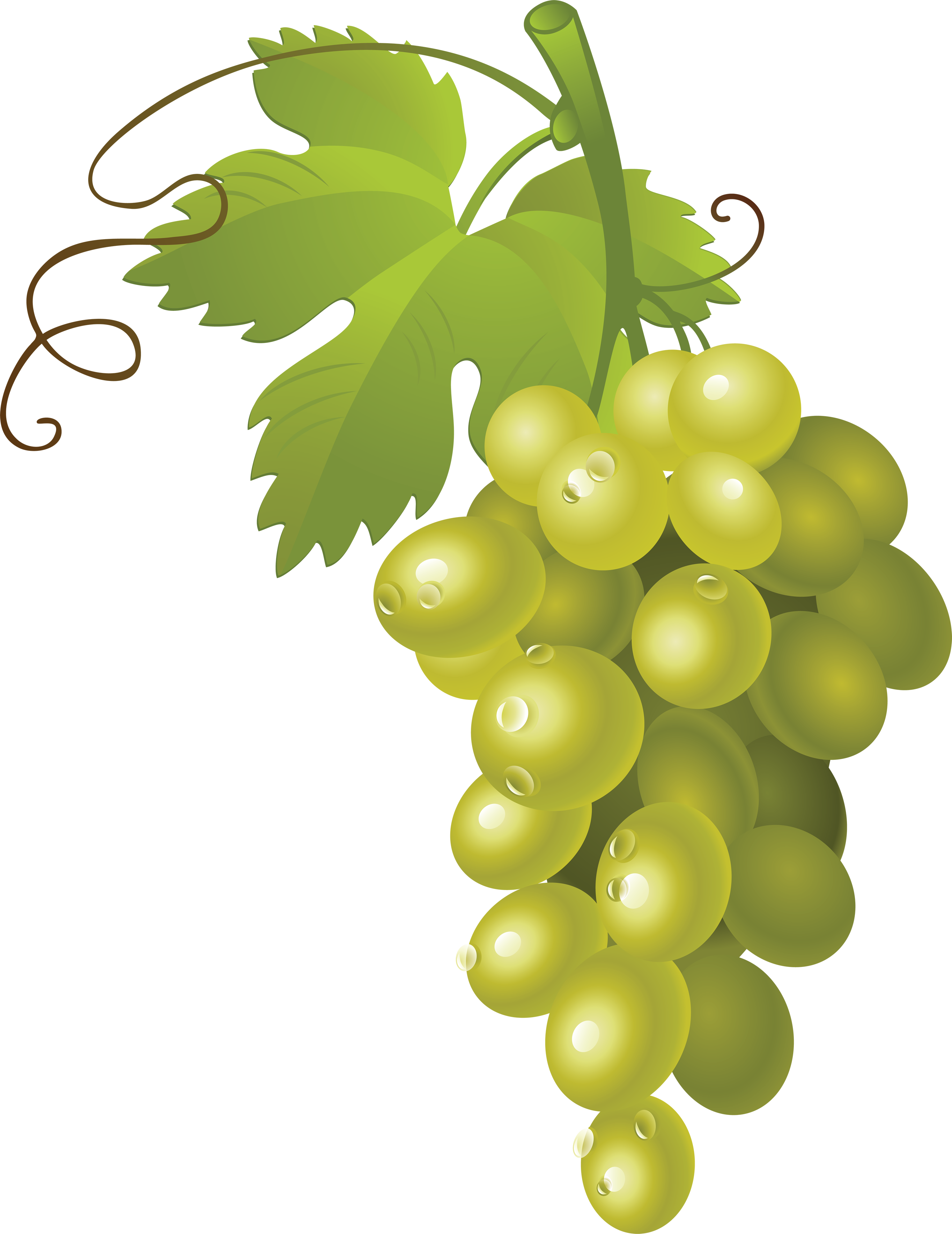 Pin by hopeless on. Grapes clipart bowl grape
