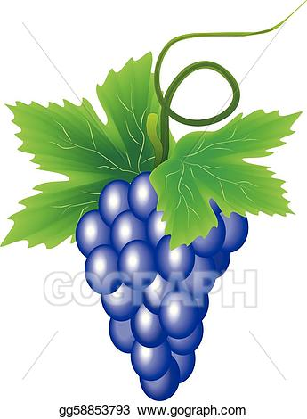 Vector stock of illustration. Grapes clipart branch