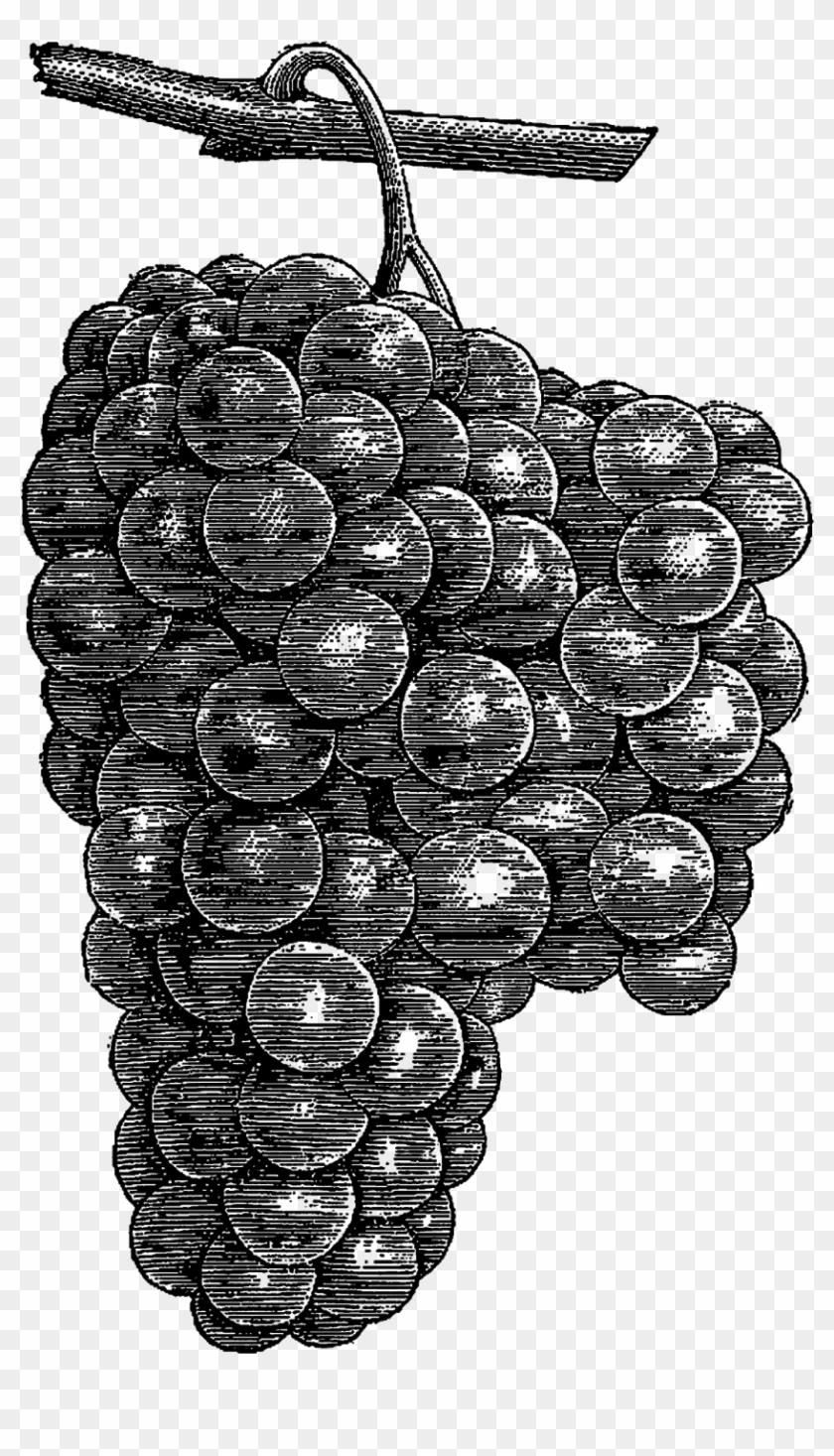 Digital download artwork drawing. Grapes clipart date fruit