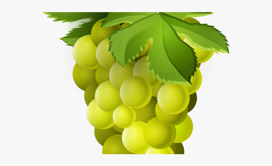Grapes . Grape clipart fruit individual