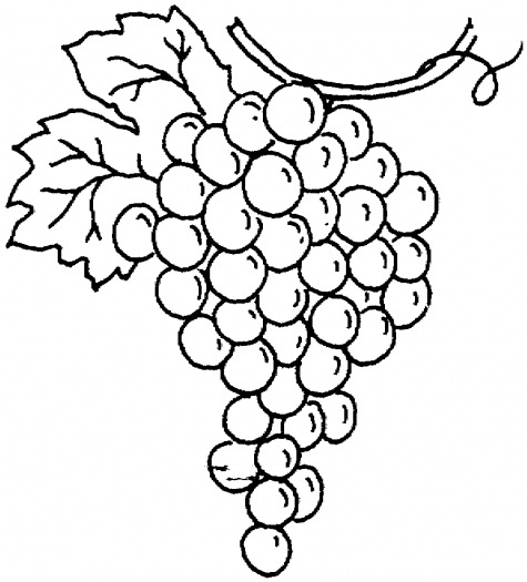 Grapes clipart outline. Black and white grape