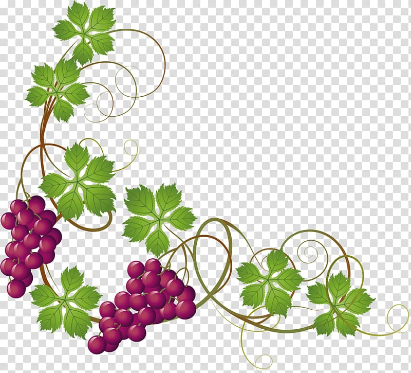 Grapes clipart painted. Purple common grape vine
