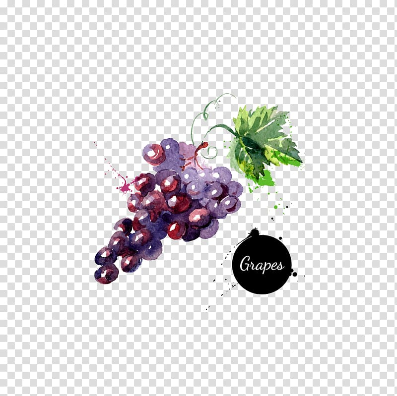 Grape watercolor painting drawing. Grapes clipart painted