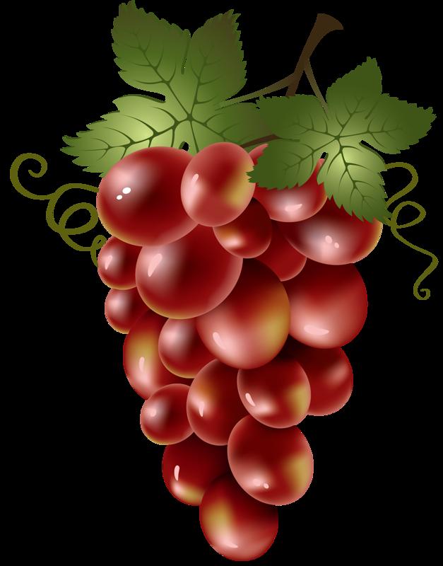 soloveika pinterest. Grapes clipart plum fruit
