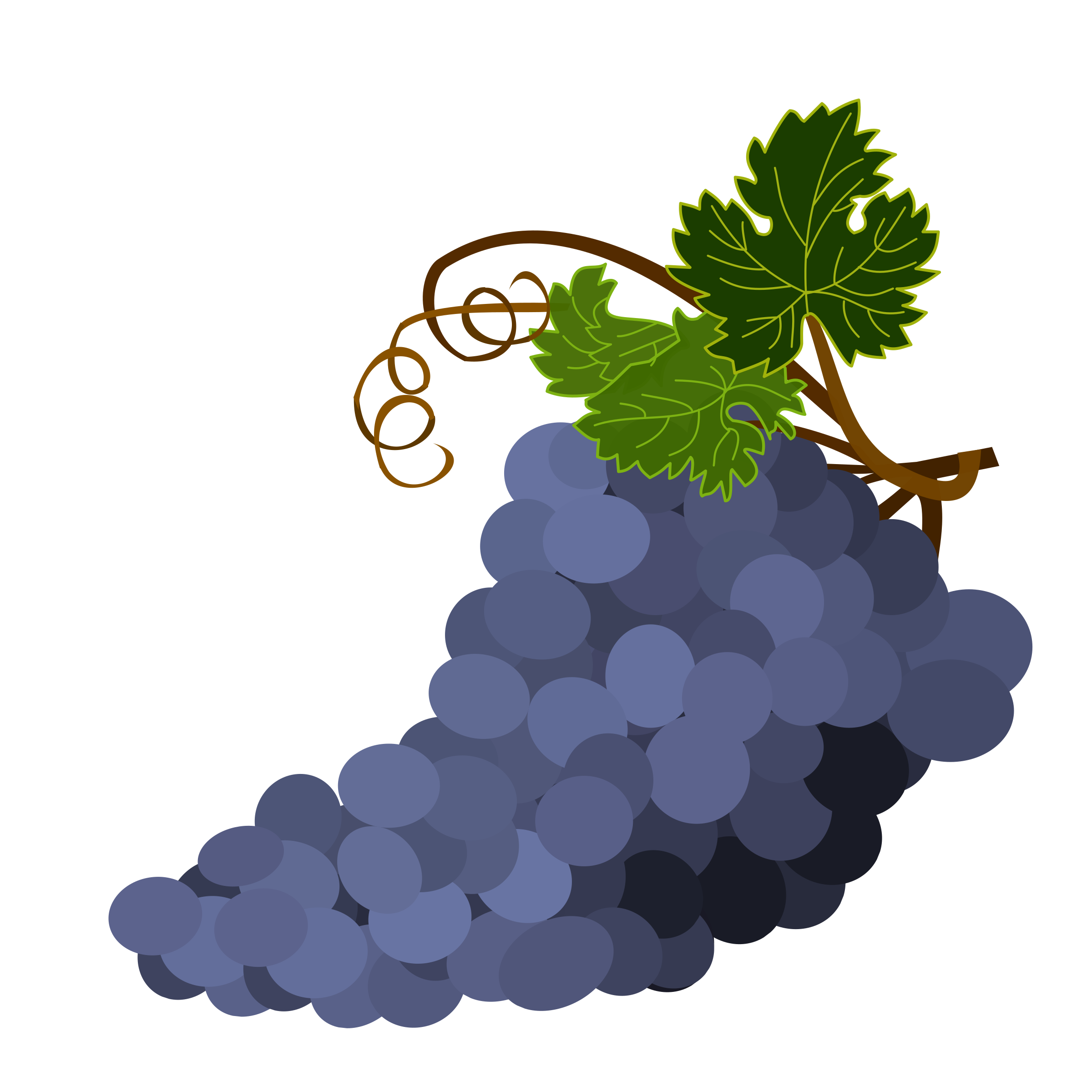 Grapes clipart real purple. Big image png