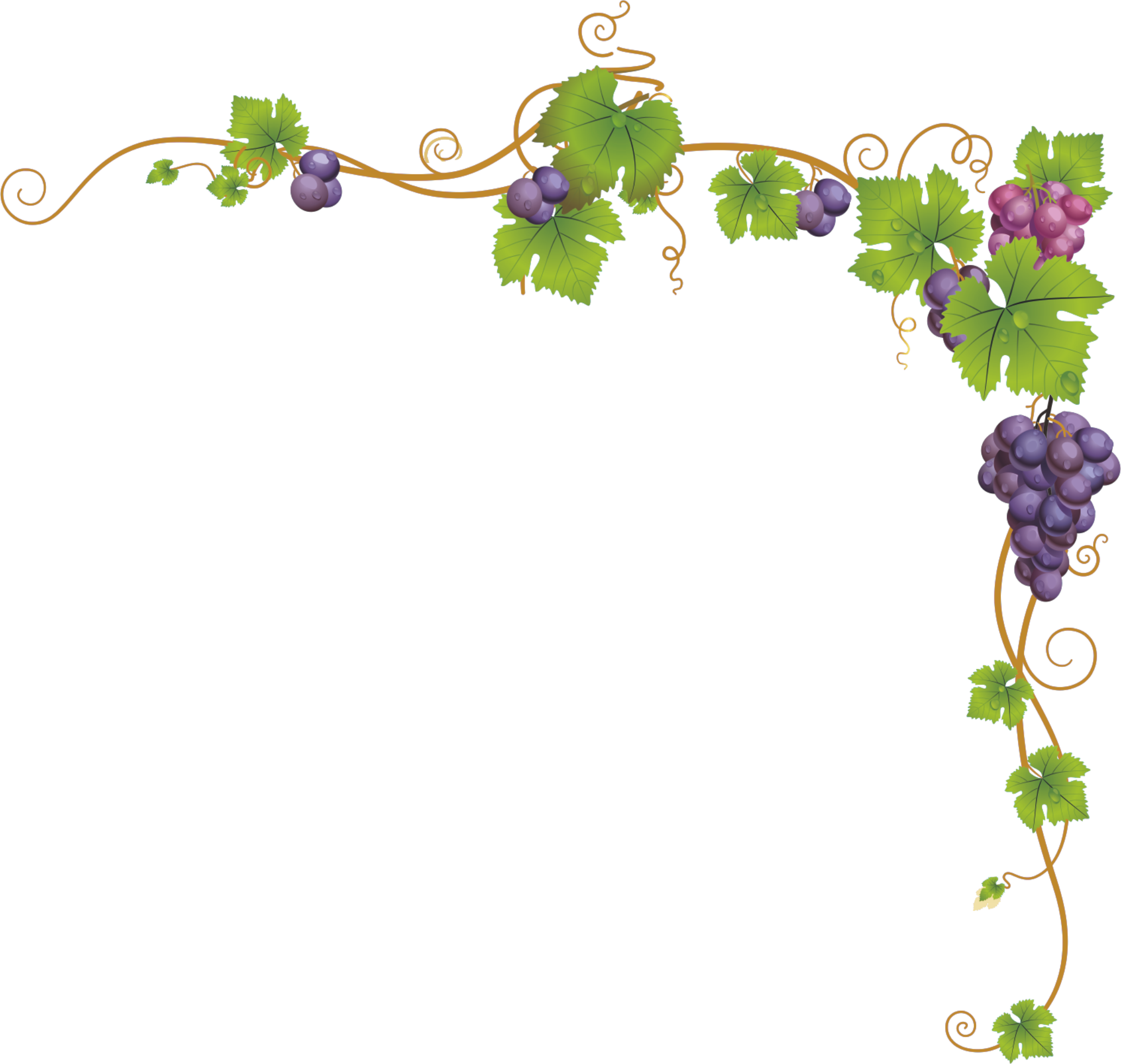 Grapes clipart watermelon vine. Church service child dendrite