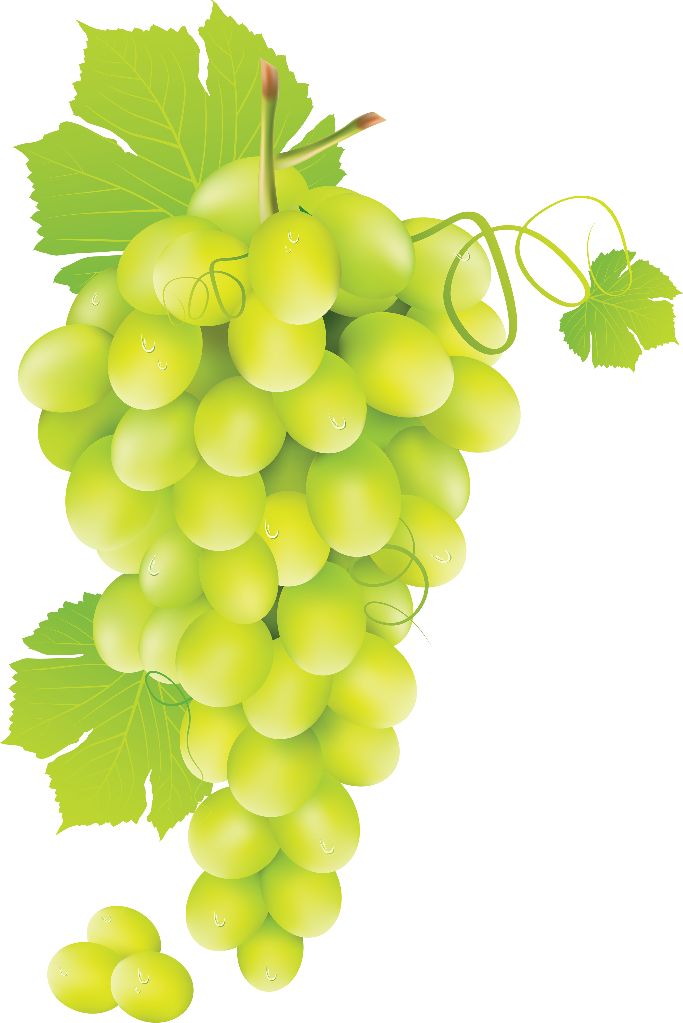 Free images . Grapes clipart yellow