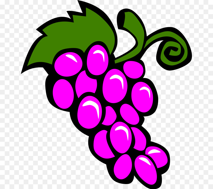 Grapevine clipart. Common grape vine wine