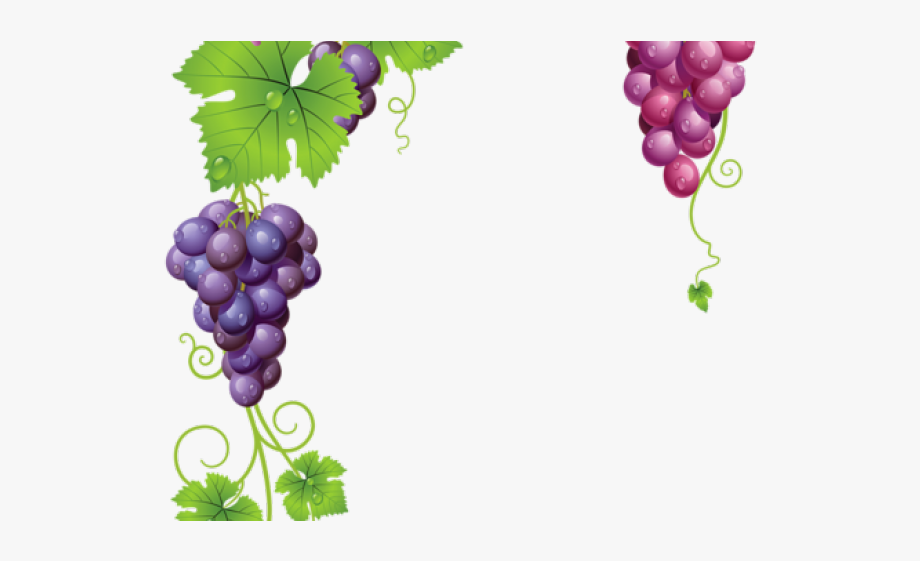 Grape clipart grape plant. Free grapevine transparent background