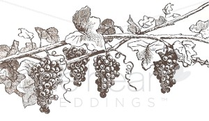 Fall wedding. Grapevine clipart