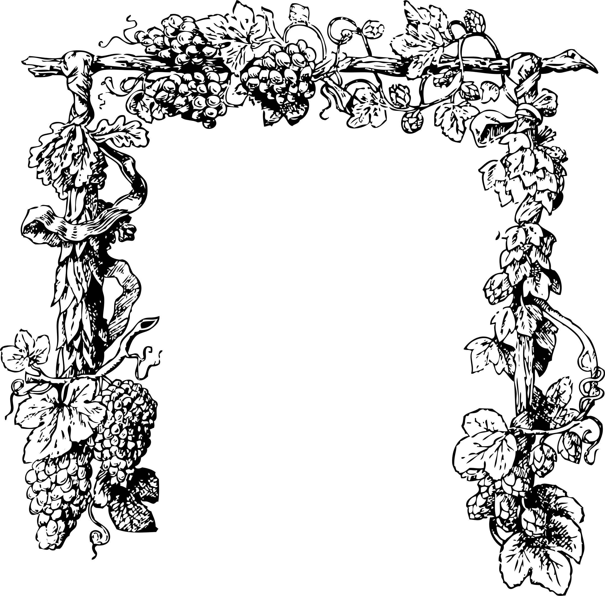 Grapes clipart frame. Grapevine transparent png stickpng