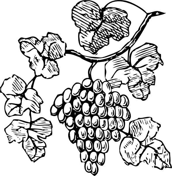 Free grapevine vine clip. Grape clipart drawing