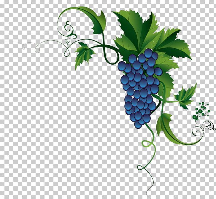 Grape leaves common png. Grapevine clipart berry vine