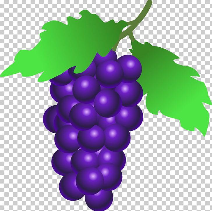 Common grape wine grappa. Grapevine clipart berry vine