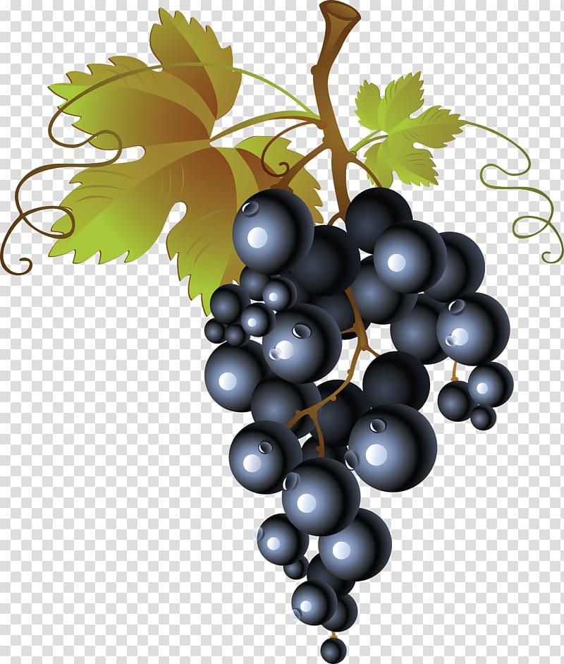 Grapevine clipart blackberry vine. Blackberries illustration juice wine