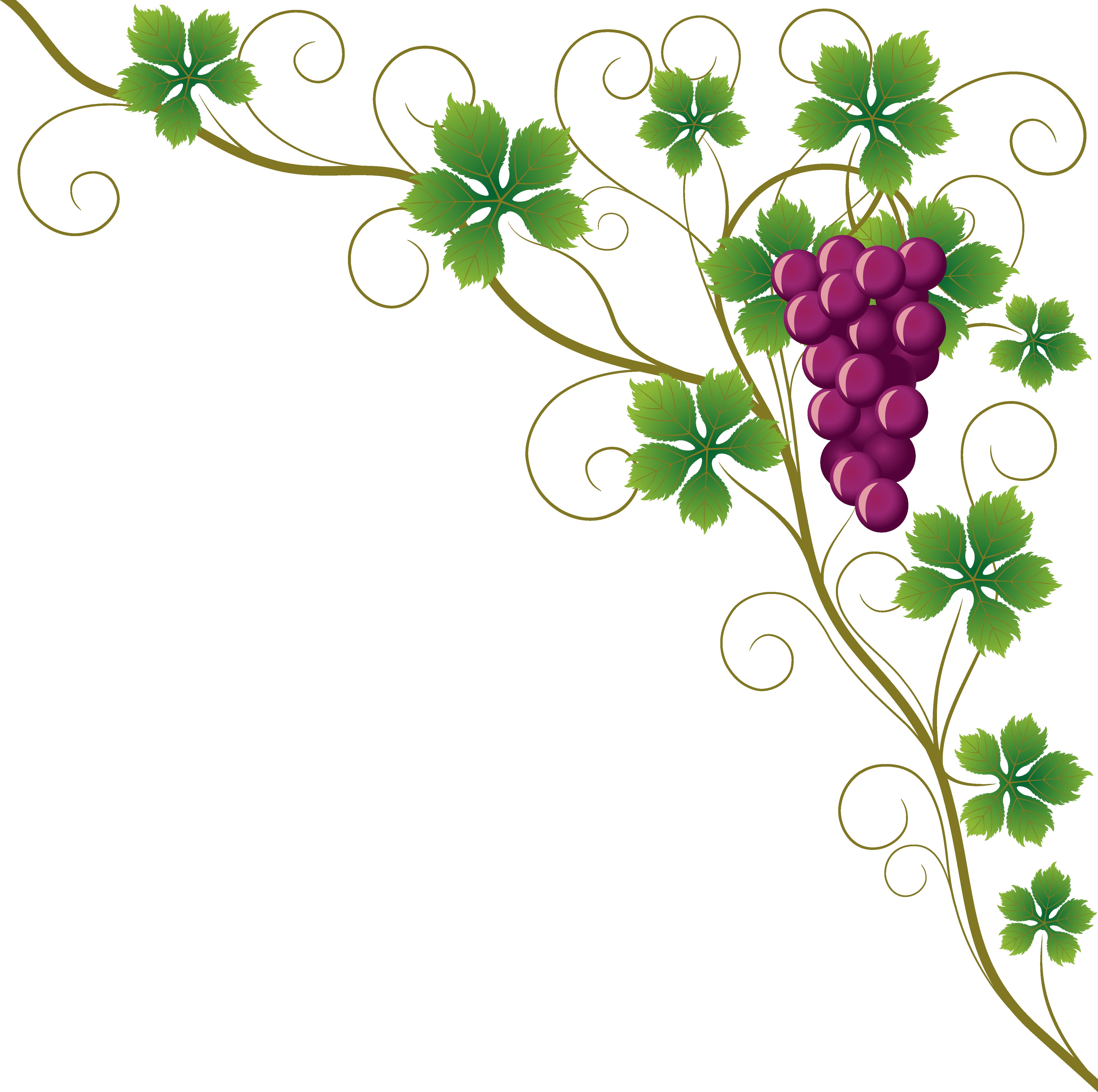 Common grape leaves wine. Grapevine clipart blackberry vine